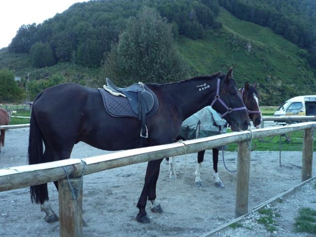 乗馬体験で乗った馬